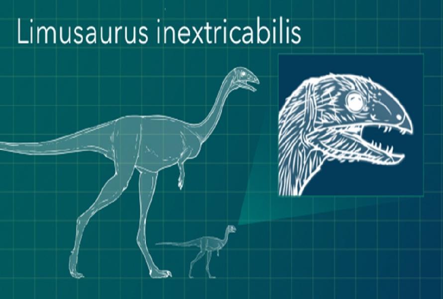 limusaurus-inextricabilis-dinosaur-1