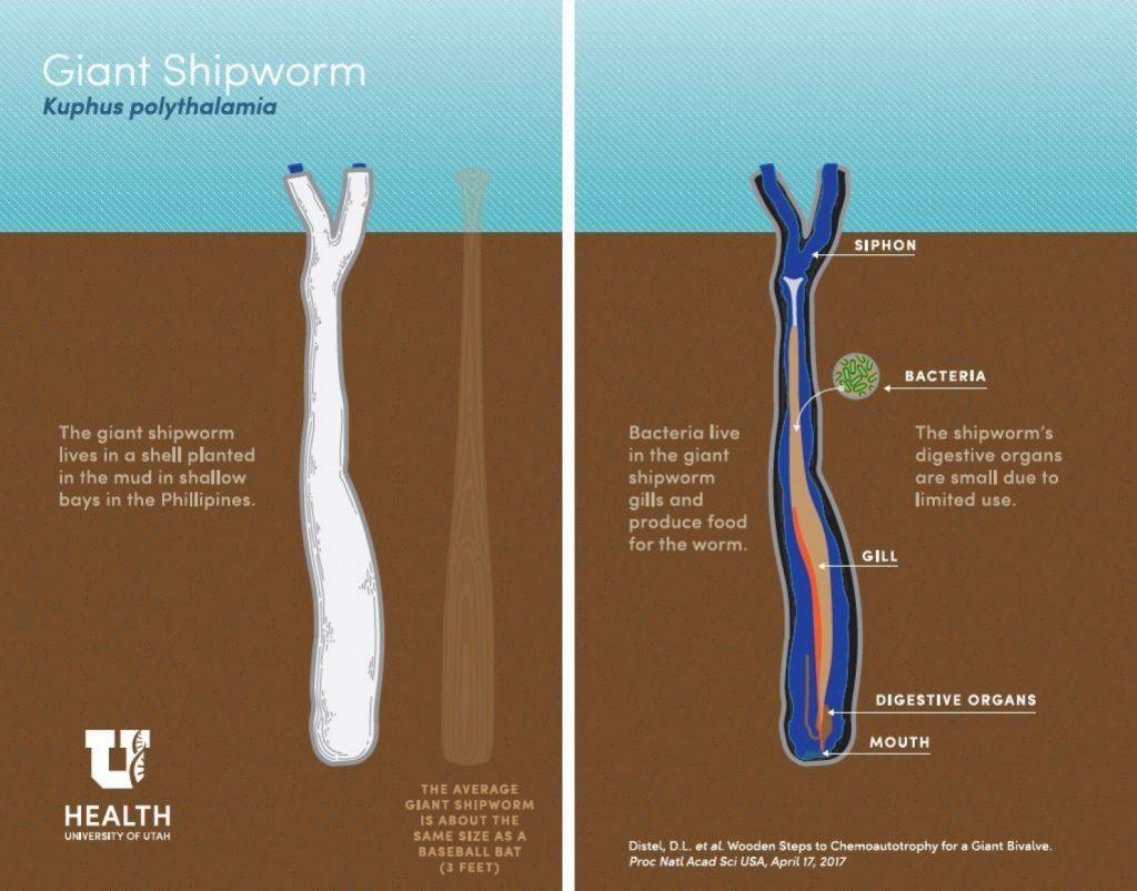 Giant Shipworm-1