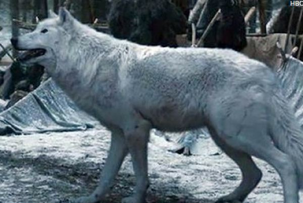 Game of Thrones news - Ghost dies